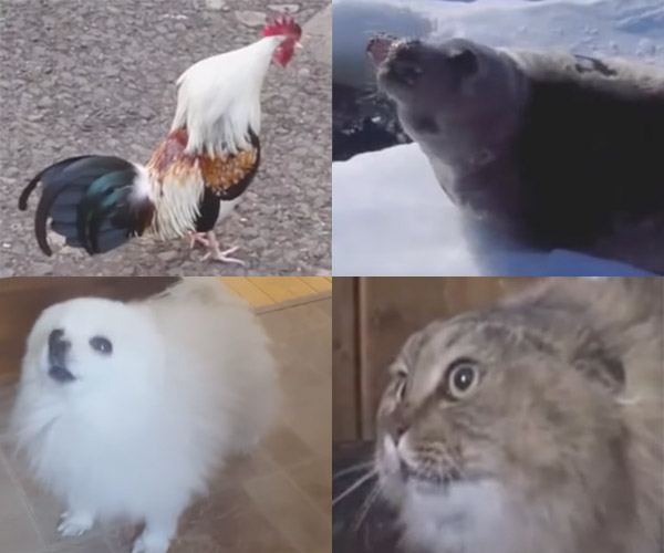 What Is Love: Animal Cover