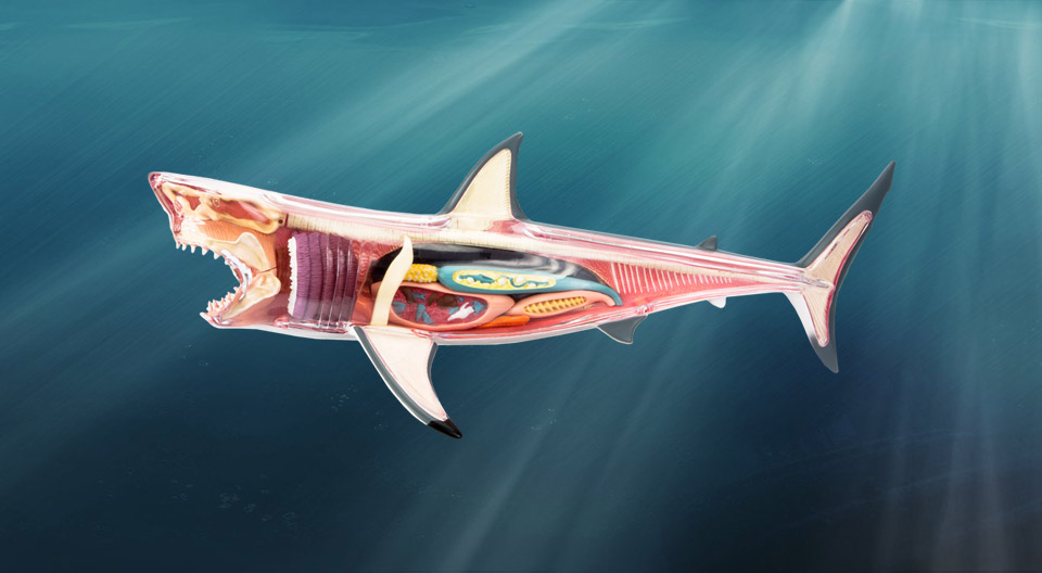 Chum the Dissected Shark