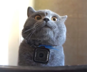 GoPro Kitty