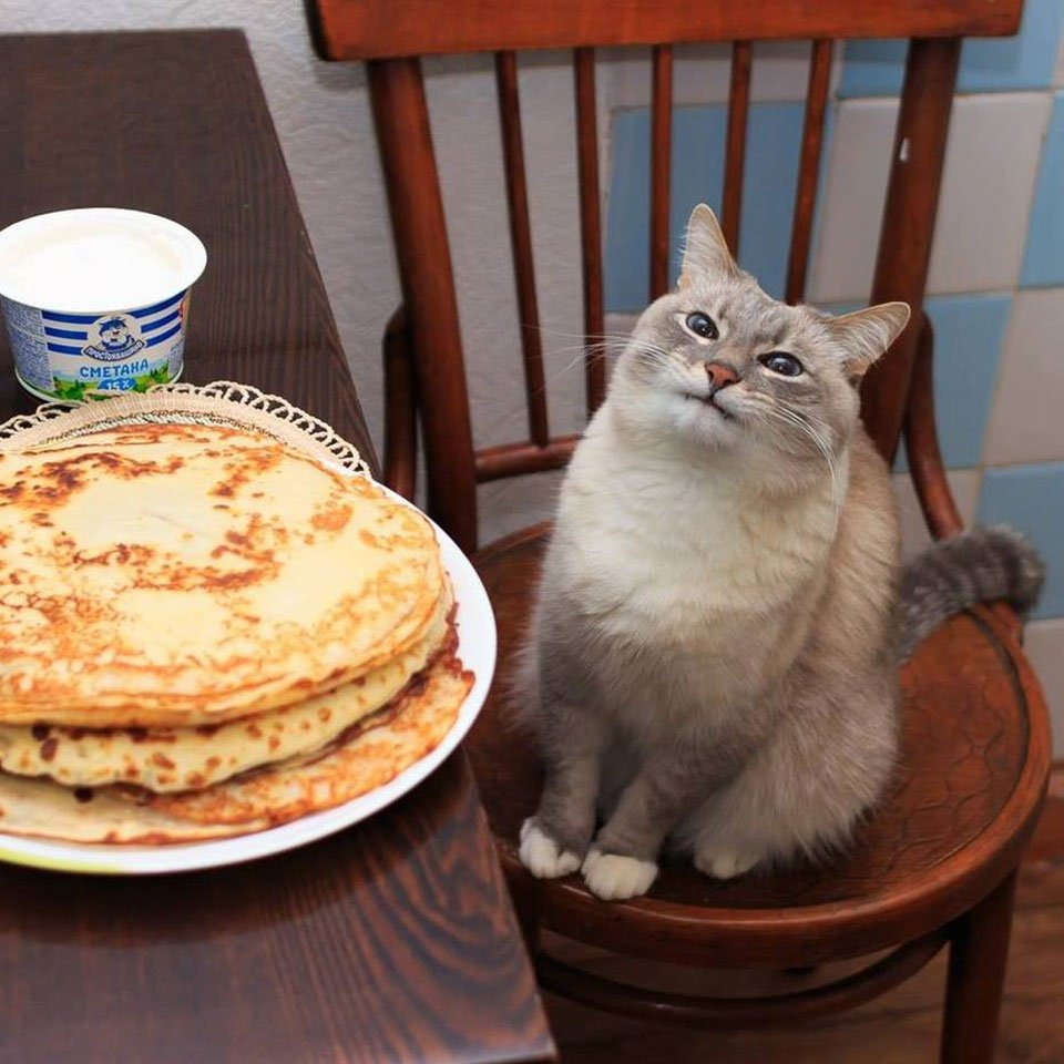 The True Meaning of Pancake Cat
