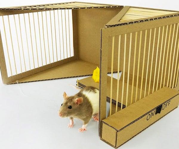 Making a Cardboard Rat Trap