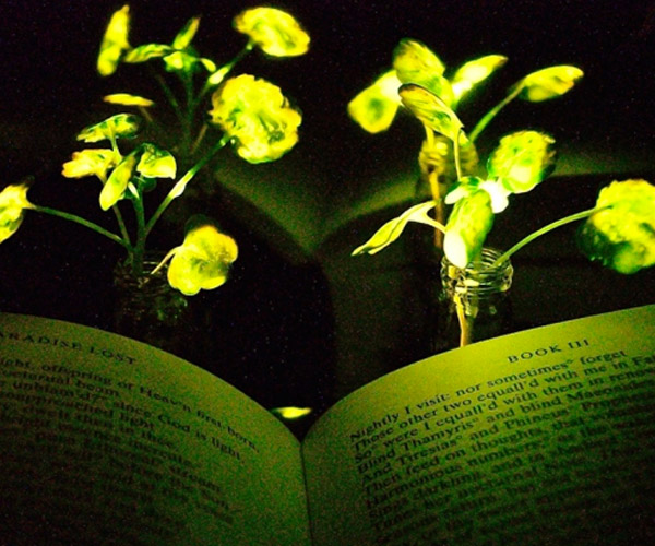 Making Plants Glow