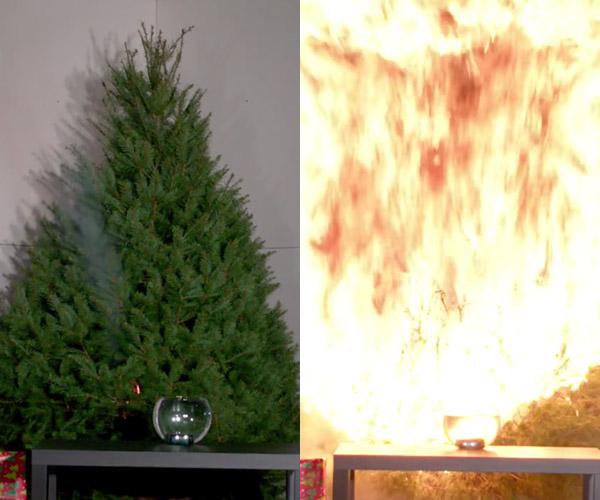 Watered Tree vs. Dry Tree