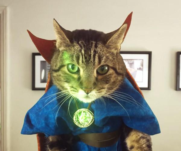 Doctor Strange Cat