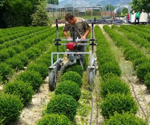 Spherical Shrub Machine