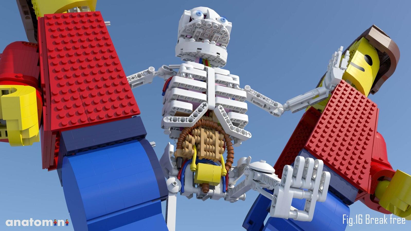 LEGO Ideas: Anatomini