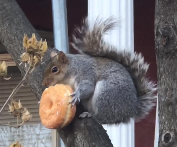 Donut Squirrel