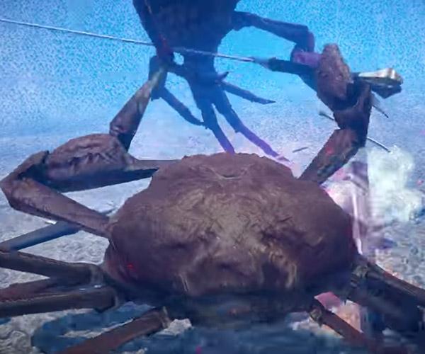 FightCrab