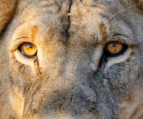Safari Botswana Time-lapse