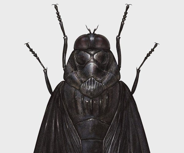 Star Wars Insects