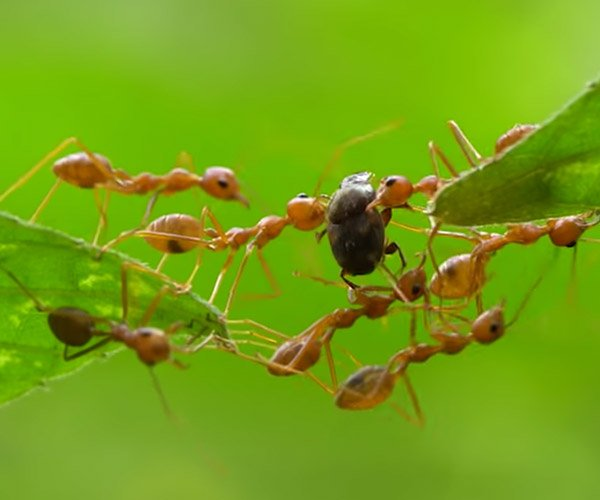 True Facts About Ant Mutualism