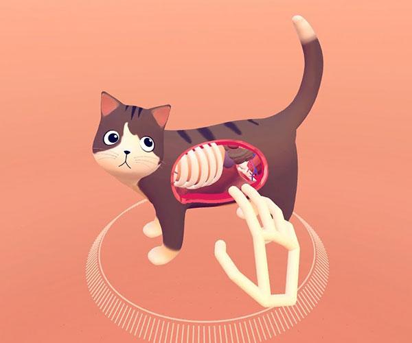 Cat Explorer