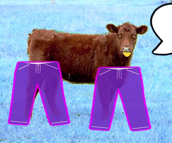 Hello Sexy Pants