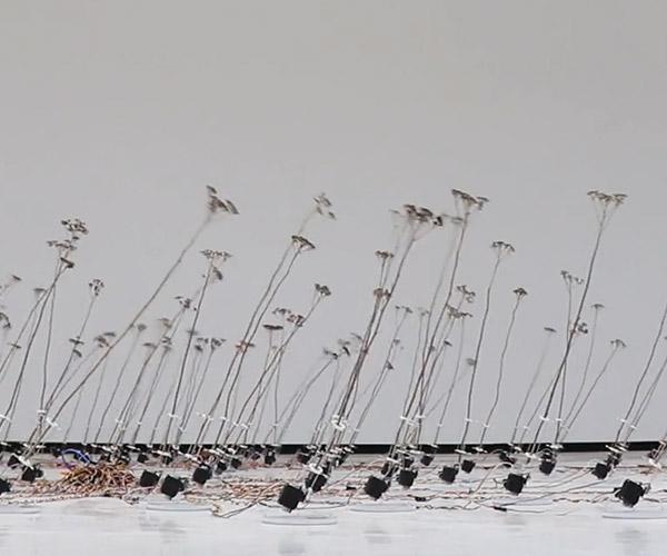 Tele-Present Wind