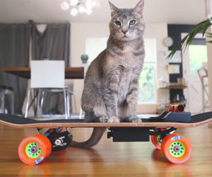 Skateboard for Cats