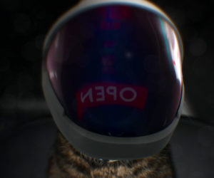 SpaceX Cat