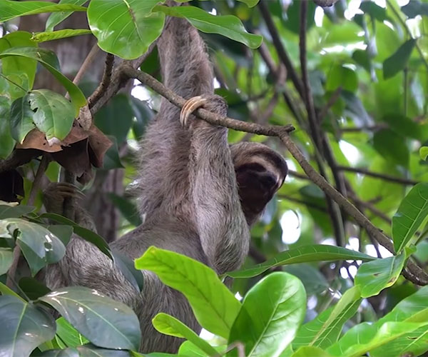 Are Sloths Low Tier?