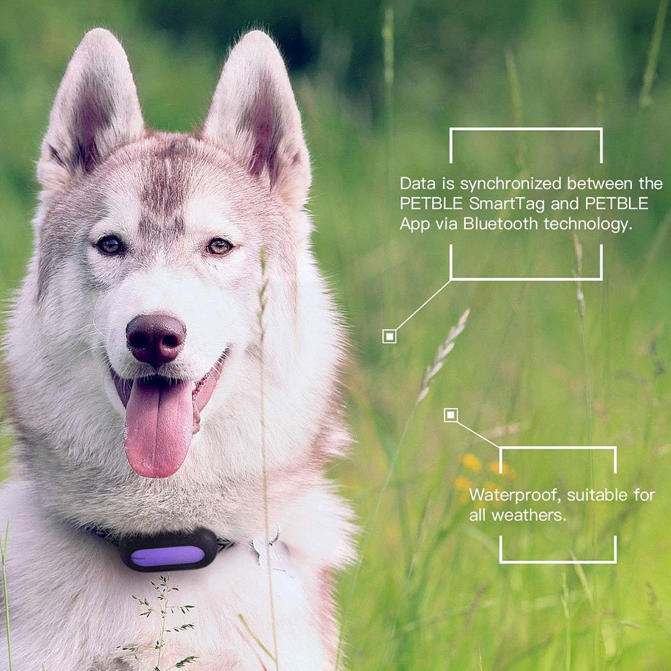 Petble Pet Activity Tracker