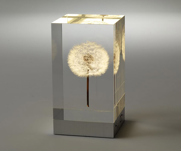 OLED Dandelion