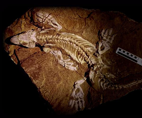 Reverse Engineering Fossils