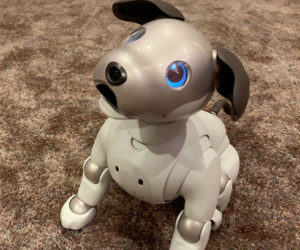 Aibo Struts His Stuff