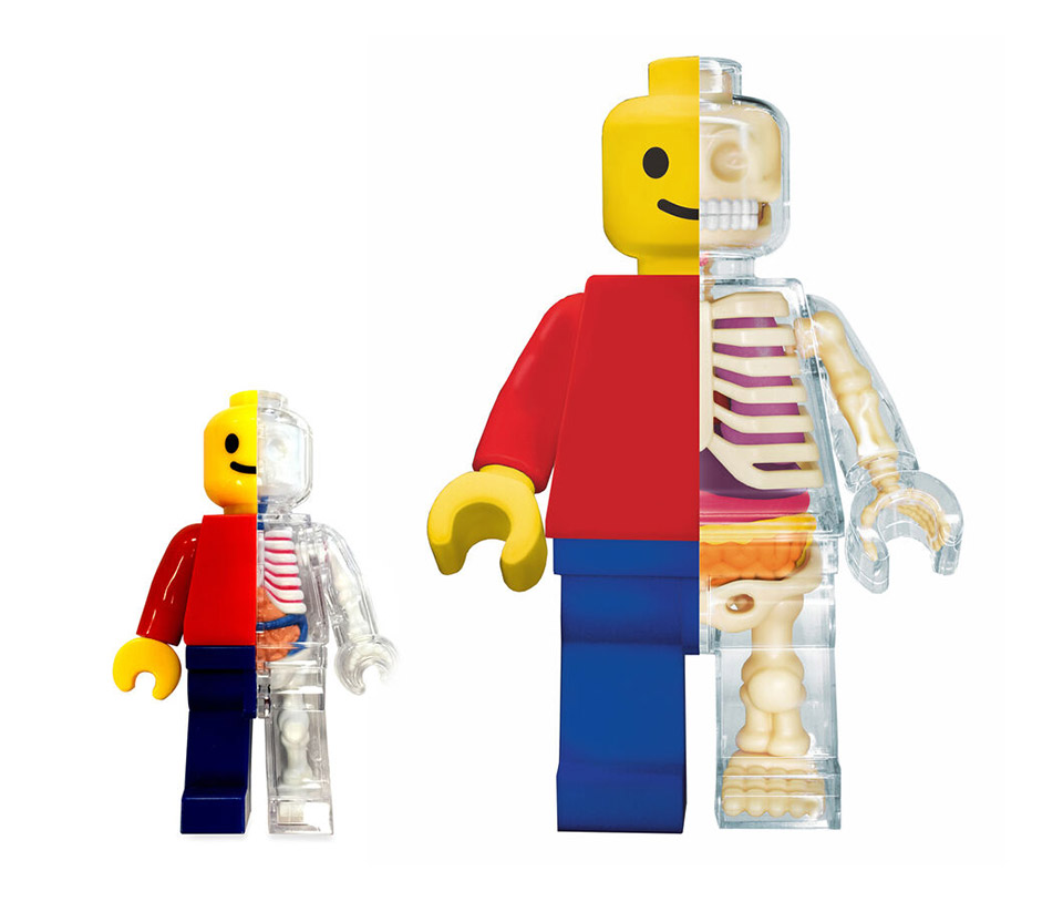 Brickman Anatomical Puzzles
