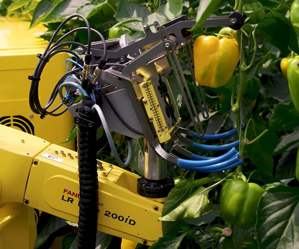 Pepper Picking Robot