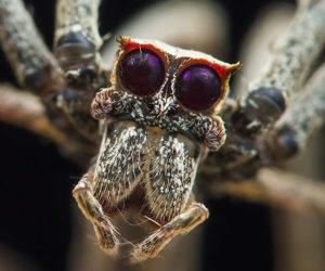 True Facts: The Ogre-Faced Spider