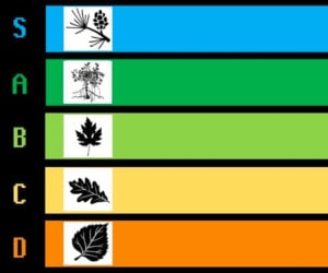 The Tree Tier List