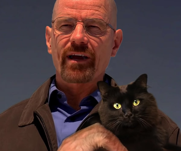 If Walter White Had a Cat