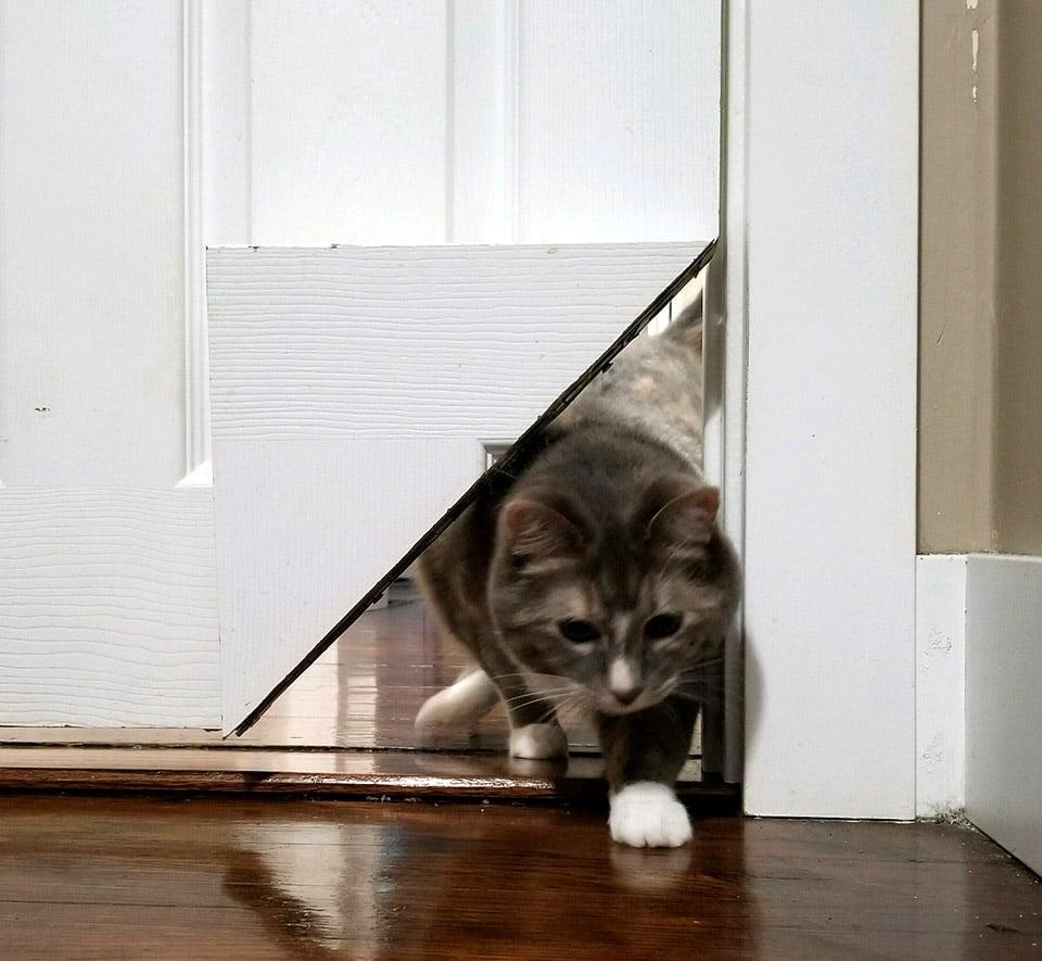 KittyKorner Pet Portal