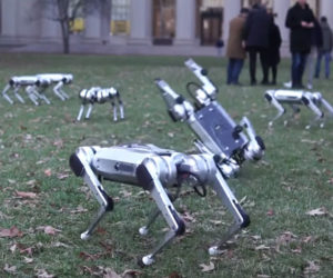 Mini Cheetah Robots Show Off