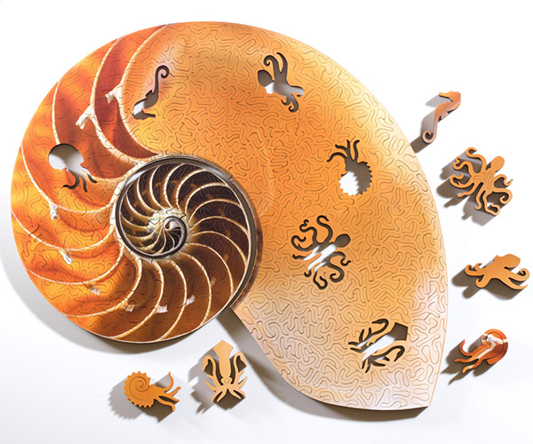 Spiral Shell Puzzles