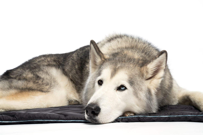 Rumpl Loki Dog Bed