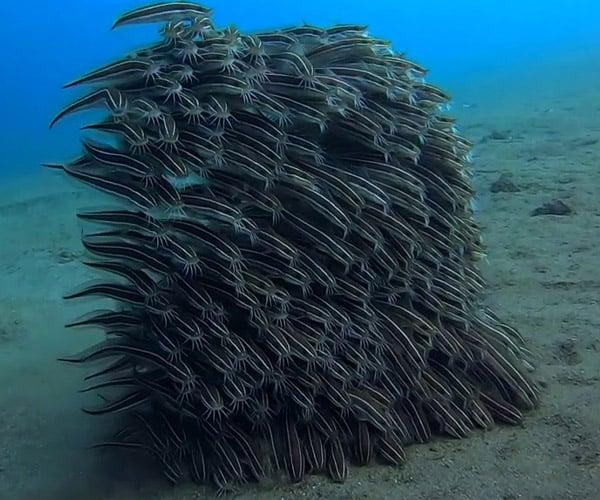 Meta Catfish