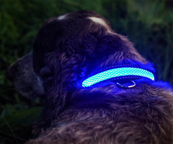 Illuminated Apparel Dog Collars