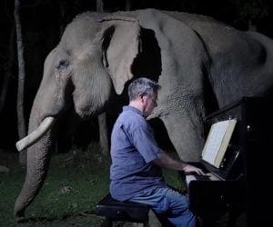 Moonlight Sonata for Old Elephant