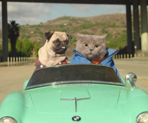 Cat and Dog Road Trip