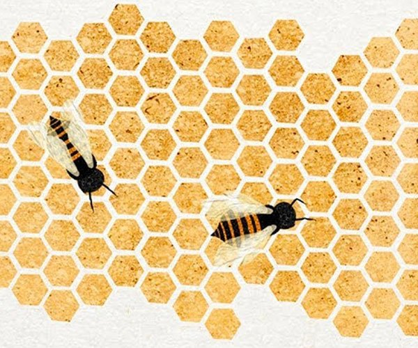 Why Honeybees Love Hexagons