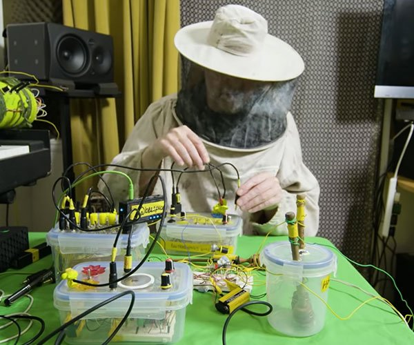 Making Music with Bees
