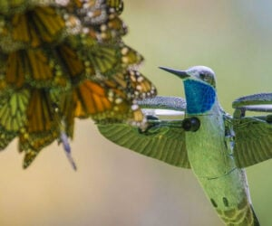 Robot Hummingbird Films Butterflies