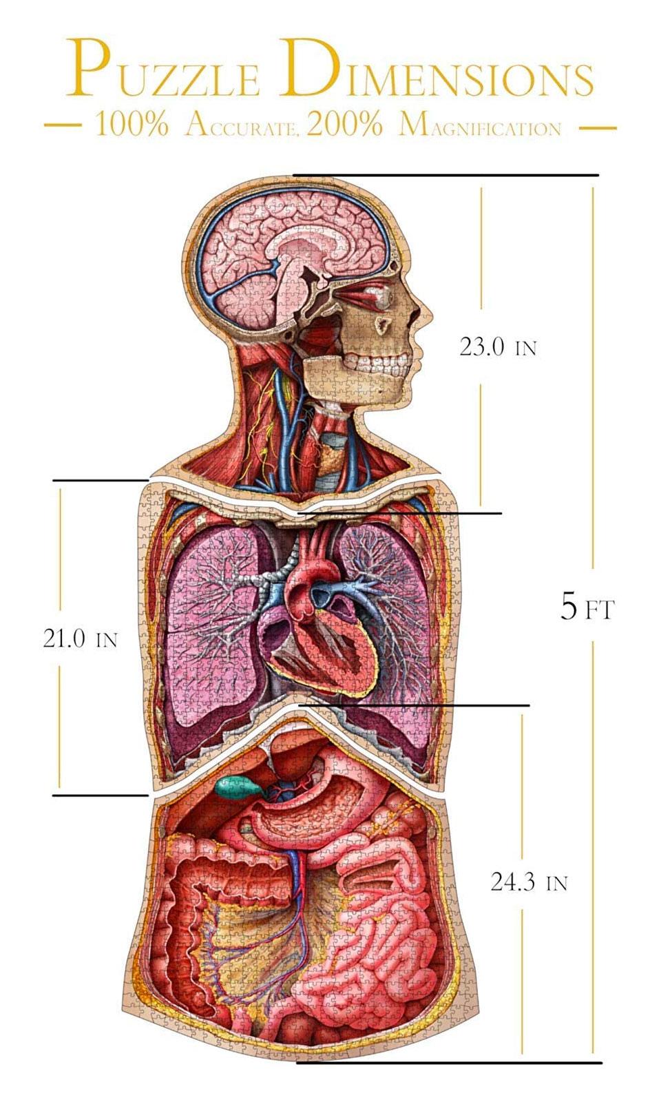 Human Anatomy Jigsaw Puzzles