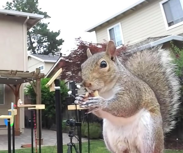 Ultimate Squirrel-proof Feeder
