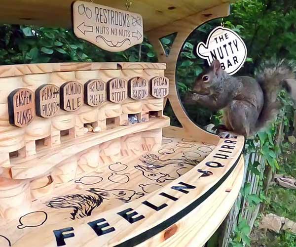 The Nutty Bar