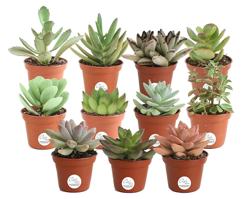 Succulent Plant Multi-packs