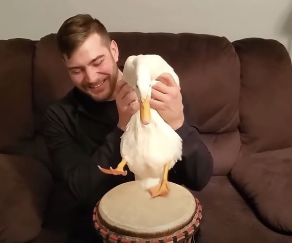 Duck Plays the Drums