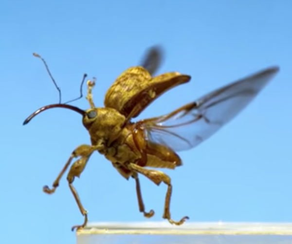Insects Take Flight in Slow-Motion