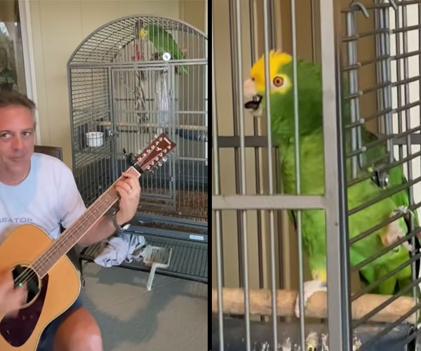 Stairway to Heaven: Parrot Edition