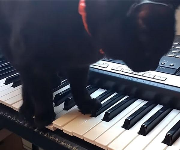 Horror Music Kitty