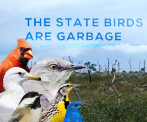 The State Birds are Garbage